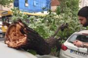 عکس | سقوط درختان روی ماشینها به دلیل وزش باد شدید در تهران