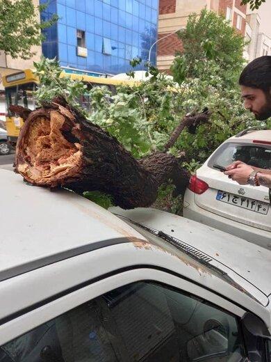 تصاویری از وزش باد شديد در تهران و سقوط درختان؛ خیابان نامجو