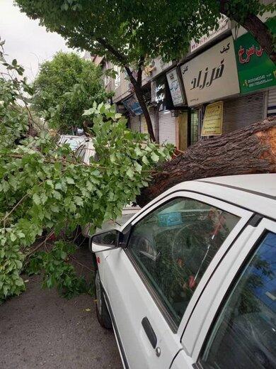 تصاویری از وزش باد شدید در تهران و سقوط درختان؛ خیابان نامجو