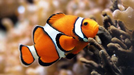ببینید | بجنگ مثل این ماهی!
