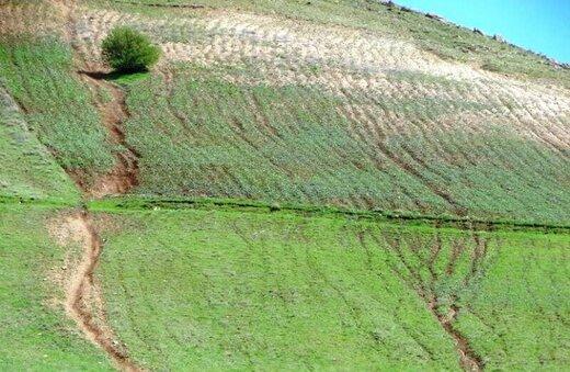 منابع طبیعی استان رتبه برتر طرحهای اجرایی را در کشور کسب کرد