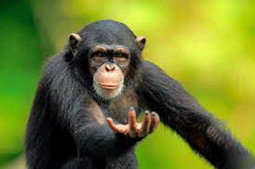 ببینید | حمله ناگهانی و زورگیری جالب میمون در قفس