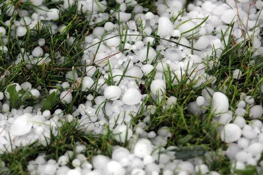 ببینید | آسیب شدید به باغات دماوند در اثر بارش باورنکردنی تگرگ