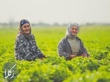 قرارداد اجاره زمین کشاورزی (نکات مهم!) را چطور بنویسیم؟