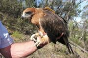 ببینید | تارزان ارمنی پدر عقابهای کوچک
