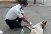 ببینید | پناه بردن عجیب یک سگ مصدوم به اورژانس در کهگیلویه و بویراحمد