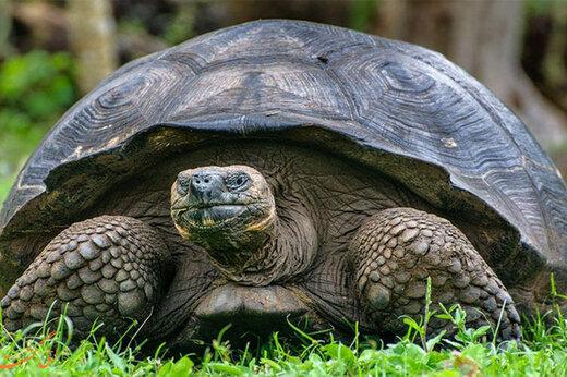 ببینید | رفاقت خبرساز و ۲۵ ساله یک لاکپشت و یک انسان