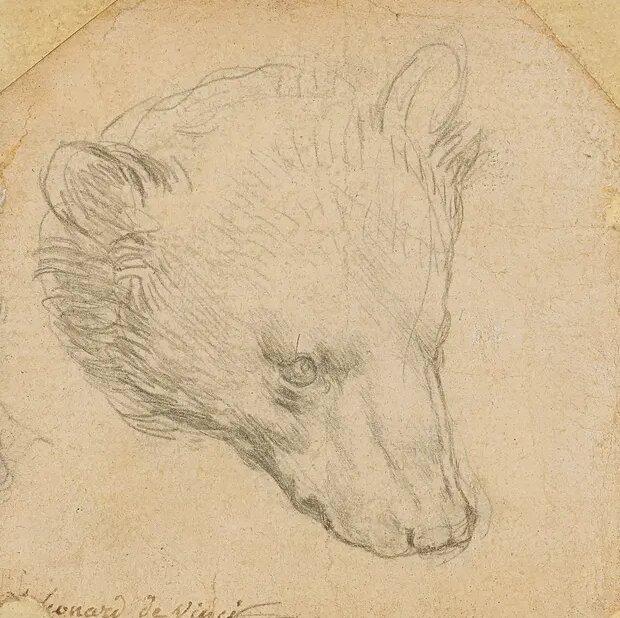 عکس | خرس ۱۷ میلیون دلاری لئوناردو داوینچی