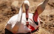 مرگ در بلورهای نمک، سهم جوجههای فلامینگو در دریاچه خشکیده بختگان