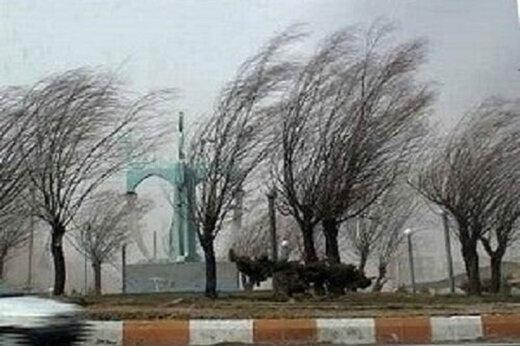 ببینید | فرار میلیمتری از مرگ؛ لحظه کنده شدن درخت در اثر باد شدید در یزد!