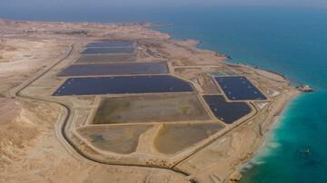 ۳ پروژه پرورش میگو در قشم افتتاح شد