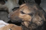 ببینید |  دار زدن ۵ سگ بی گناه در تبریز توسط زن بی رحم