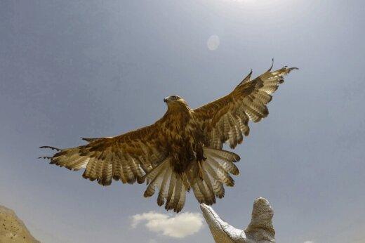 ببینید | لحظه تماشایی رهاسازی دو عقاب امپریال