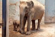 ببینید | تولد نخستین فیل در تهران