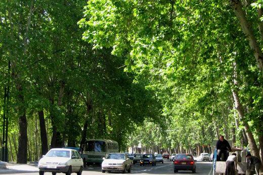 زیباترین خیابان های جهان/ شگفتی و آرامش را به چشم خود ببینید