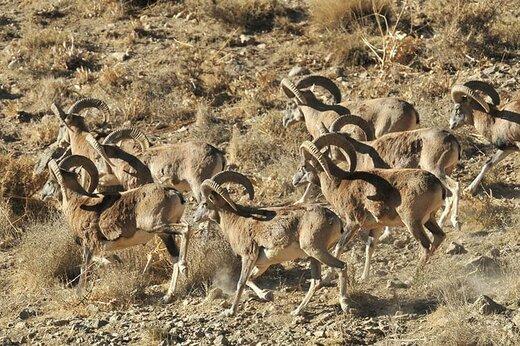در برابر انقراض گونهها، انتخاب با ماست: انفعال یا اقدام