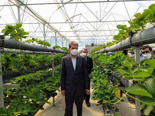 افتتاح فاز اول گلخانه هیدروپونیک سبزی و صیفی روستای گنگچین با ظرفیت تولید سالانه ۶۰۰تن