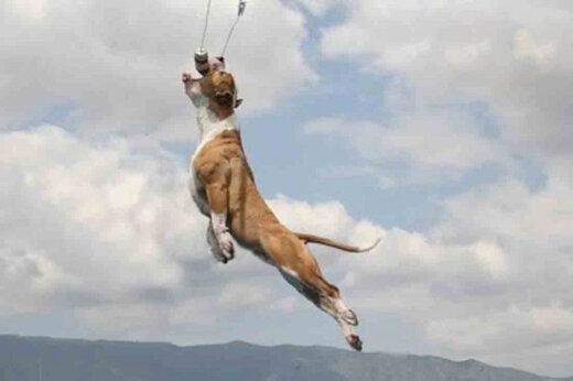 ببینید | پرواز باورنکردنی و شگفتانگیز یک سگ در آسمان!