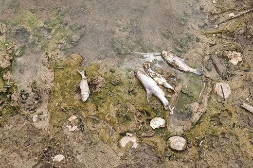 ببینید   تلف شدن هزاران ماهی در پارک ملی دز