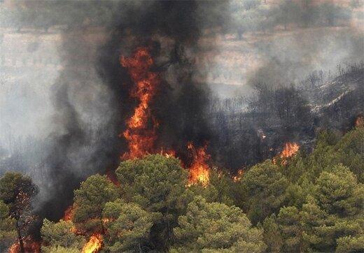 اینجا ۴ سال است که میسوزد/نتیجه آتشسوزی دیل؛ مرگ درختان صدساله