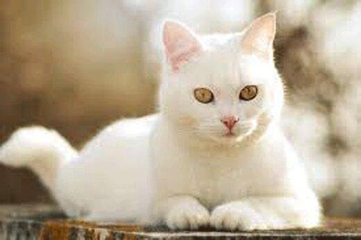 ببینید | انعطاف خیرهکننده و تعجببرانگیز یک گربه!