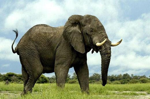 ببینید   لحظات نفسگیر نجات یک فیل در آستانه سقوط در یک حفره عمیق