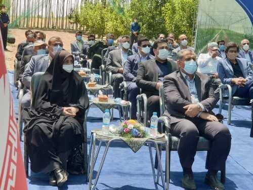 مدرنترین طرح سایبان باغهای میوه کشور در قزوین افتتاح شد