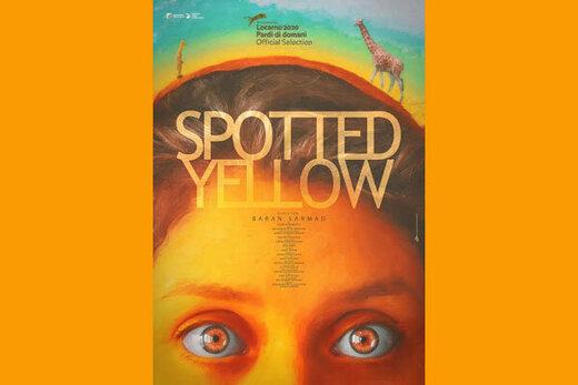 حضور «زرد خالدار» در جشنواره پالم اسپرینگز