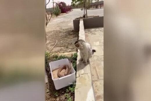 ببینید | واکنش جالب و شگفتانگیر یک گربه در مقابل حمله مار
