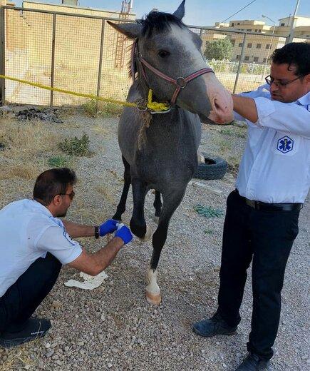 ماجرای عجیب پناه بردن یک اسب به اورژانس لردگان