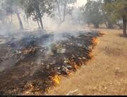 آتش در جنگلهای دنا شعله کشید