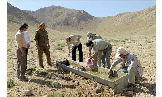 تأمین آب در شرایط خشکسالی، یکی از چالشهای حفاظت از حیات وحش