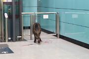 ببینید | حضور دردسرساز و خندهدار بچه گراز در مترو
