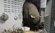 ببینید | لحظه رعبانگیز و عجیب ورود یک فیل گرسنه به آشپزخانهای در تایلند