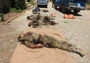 انهدام تیم تروریستی ضدانقلاب در کردستان / ۵نفر از تروریستها به هلاکت رسیدند