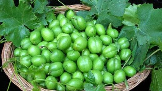 کاهش ۵۰ درصدی تولید گوجه سبز در ابرکوه