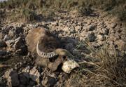 مقصر فاجعه امروز هورالعظیم کیست؛ وزارت نیرو، عراق یا «آبدزدها»؟