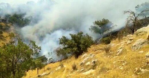برآورد خسارت ۴۰۰ هکتاری آتش سوزی جنگلهای نارک گچساران