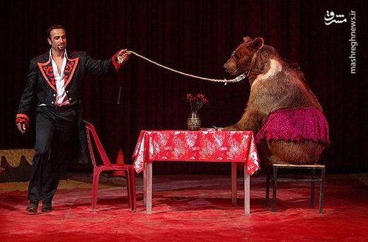ببینید   حمله خرس به مربیاش در حین اجرای برنامه در سیرک