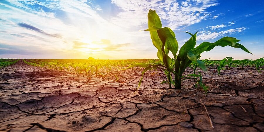 کشت دوم محصولات کشاورزی در همدان ممنوع شد