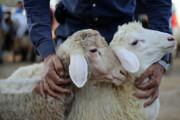 اینفوگرافیک   توصیههای کرونایی برای توزیع و مصرف گوشت قربانی
