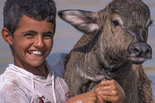 ببینید |  شادی نوجوان خوزستانی از رسیدن آب به گاومیشها