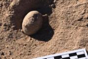 ببینید | کشف تخممرغهای فسیل شده 85 میلیون ساله در آرژانتین