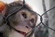 ببینید | بزن بزن میمونها وسط شهر