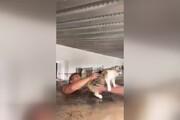 ببینید | لحظه جالب و احساسی نجات گربههای گرفتار در سیل توسط دانشجویان