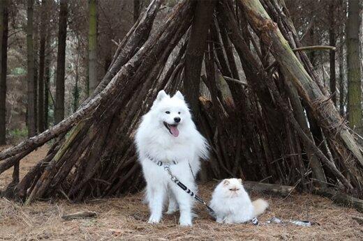 ببینید | بازی خندهدار و تماشایی یک سگ و گربه سفیدرنگ و زیبا در میان برف!