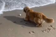 ببینید | تلاش جالب و تحسینبرانگیز یک سگ برای پس گرفتن توپش از دریا