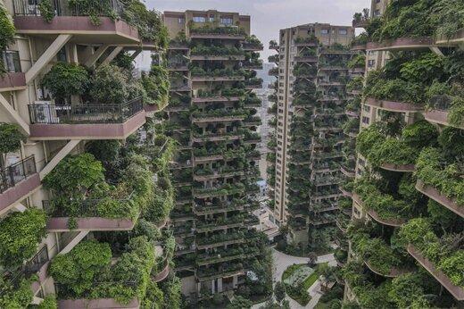 ببینید | جنگل عمودی؛ شگفتی دیگری از چین!