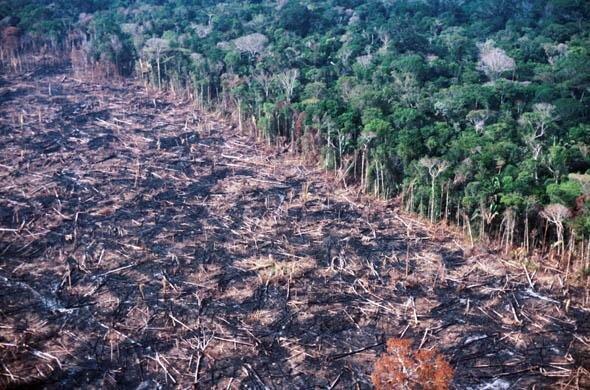 فروپاشی اکولوژیکی جهان؛ آیا تغییرات اقلیمی وارد مرحله جدیدی شده؟
