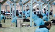 اشتغال ۱۲۰۰ زندانی در قزوین